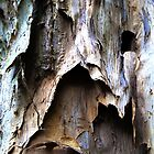 Beautiful Bark Abstract. #b by ronsphotos