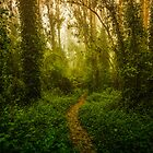Eucalyptus Trail by Toby Harriman