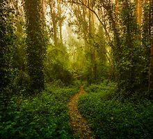 Eucalyptus Trail by Toby Harriman