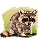 Raccoon - Digital Painting by Tom Lopez by Tom Lopez