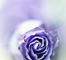 Purple breeze....(soft 2) by Bob Daalder