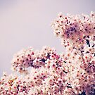 Blossom by jrsisson
