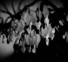 Bleeding Hearts_2 by Hope Ledebur