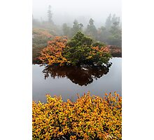 The Turning of the Fagus Photographic Print
