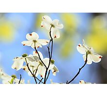 Color My World With Springtime Photographic Print