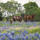 Bluebonnet images - Horses in in a Field of Bluebonnets in Ennis, Texas by RobGreebonPhoto
