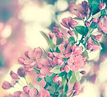 Cherry Blossom by zinchik