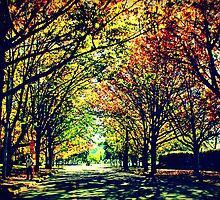 Autumn In Canberra by Evita