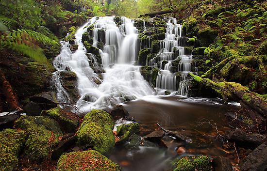 Rainforest rewards  by Donovan wilson