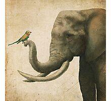 A New Friend (colour option) Photographic Print