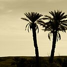 Palm Trees by maxxkia