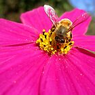 Bee on pink flower (2) by LeJour