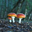 toadstools, Photographed in New Zealand  by PhotoStock-Isra