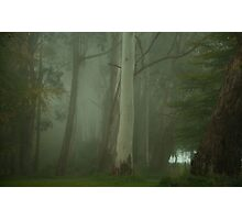 Mistical - Mount Wilson, NSW Australia Photographic Print
