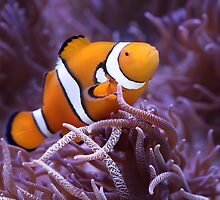 I Found NEMO by Shannon Rogers