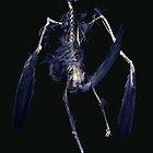 Crow Skeleton by merrywrath