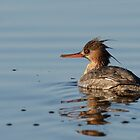 Mrs. Red-breasted Merganser by Jeannine St-Amour