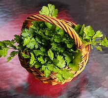 Fresh Cilantro by heatherfriedman