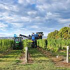 Grape Harvest Marlborough by Heike Richter