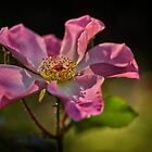 Libbys Rose by Dianne English