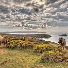 Ponies at Navax Point II by PlanetPenwith