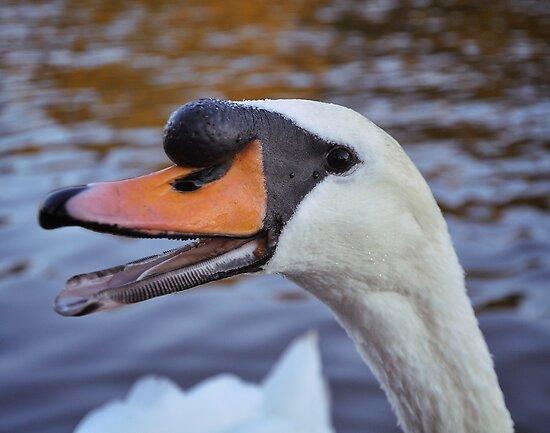 Happy swan by Designer023