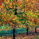 Autumn orchard_1 by Rob Meredith