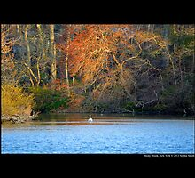 The Grist Mill Pond - Stony Brook, New York by © Sophie W. Smith