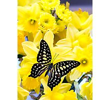 Butterfly and Daffodils Photographic Print