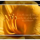 First Day Lily by aprilann
