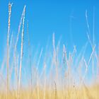 Golden Grasses on a Sunny Day by Natalie Kinnear