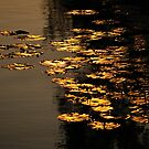 Floating gold by Javimage