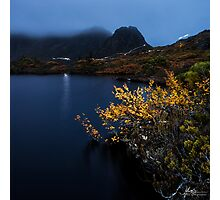Searching for the Fagus Photographic Print
