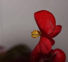 Red! by aprilann
