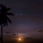 The Moon, The Stars and a Palm Tree by Karen Willshaw