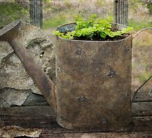 Recycled Watering Can by Ginger  Barritt