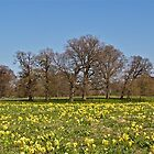 Cowslips by John Thurgood