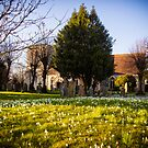 Snowdrops in Kintbury England by mlphoto