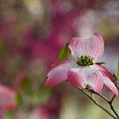 Pink Wonderment by Rachel Sonnenschein