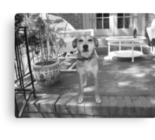 Luck Baby on the Stair Canvas Print