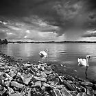 Swan Lake by redtree