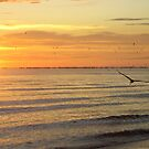 Sunset On Estero Island, FL 2009  by Ginger  Hamilton