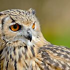 Bengal Eagle Owl by Margaret S Sweeny
