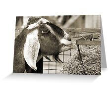 Whats got your Goat? Greeting Card