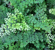 tiny leaves by Paula Bielnicka