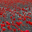 A field of red poppies by SteveHphotos