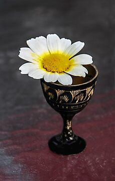 Daisy Still LIfe by heatherfriedman