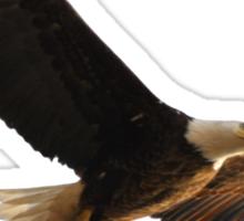 Dougherty Iowa Eagles Sticker