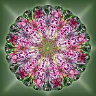Springtime Mandala by haymelter