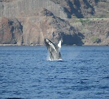 Breaching Humpback Whale by Katie Grove-Velasquez
